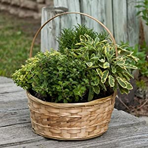 Herb Garden in Decorative Gift Basket - Edible Herbs - Green Gift that Ships Via 2-Day Air!
