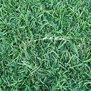 how to make your grass seed grow fast