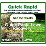 1kg Quick Rapid Lawn Recovery Grass Seed Fast Repair Dog Urine Patch Tired Lawns From Ivisons Seeds