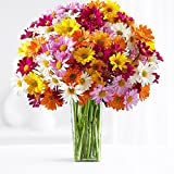 100 Blooms of Assorted Daisy Poms - Flowers