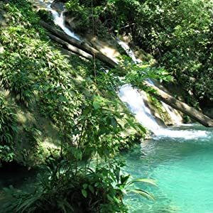 Caribbean Rainforest with FUNDAECO: Audio Journeys | [Patricia L. Lawrence]