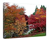 """iRocket Canvas Prints Wall Art - Canada-Vancouver-Vanduusen Botanical Garden - Wood Board Background Stretched Canvas Wrap Ready To Hang For Home And Office Decoration - 24"""" X 16"""""""