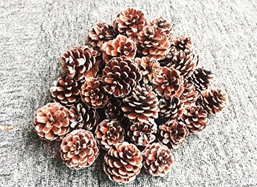 50pcs Natural Pine Cones, SOMAN Tall Snow Pinecones Hanging on Christmas Tree for Christmas Weddings Parties Decorations (54pcs one package you will get 4pcs for free) (Dillards Robes)