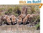 Leoparden und Geparde (Tischkalender...