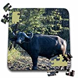 Angelique Cajam Safari Buffalos - South African Buffalo side view face view - 10x10 Inch Puzzle (pzl_20120_2)