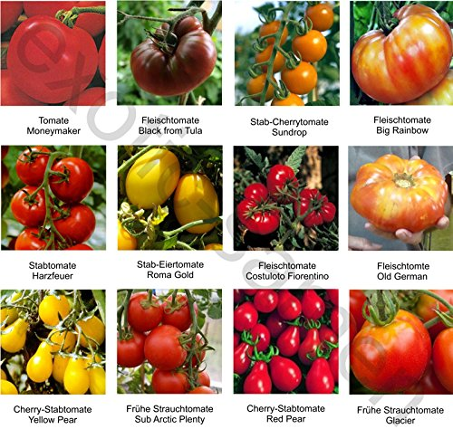 samen saatgutsortiment 1 set mix mischung historische tomatensorten 12 sorten 10 samen. Black Bedroom Furniture Sets. Home Design Ideas