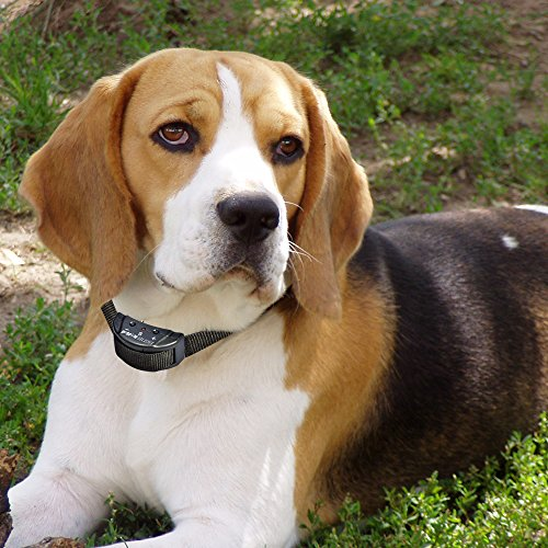 Bark Training Volor For Little Dogs
