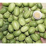 Mexican Miniature Watermelon 15 Seeds -Melothria scabra