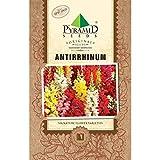 PYRAMID SEEDS ANTIRRHINUM (200 SEEDS