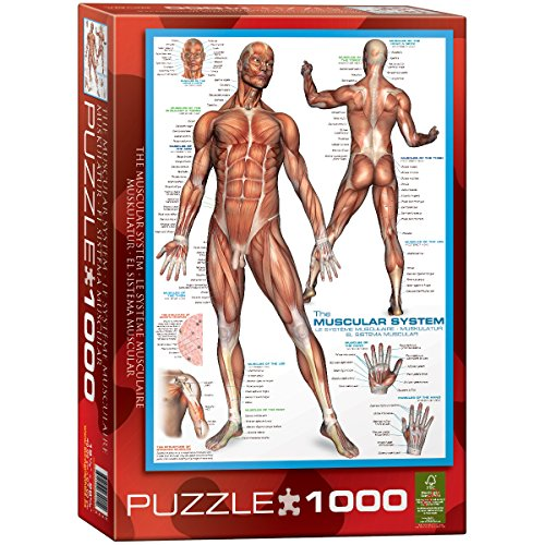 Eurographics Muscular System 1000-Piece Puzzle