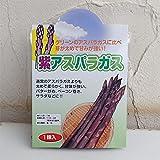 アスパラガス:紫アスパラガスMサイズ 1株袋詰め