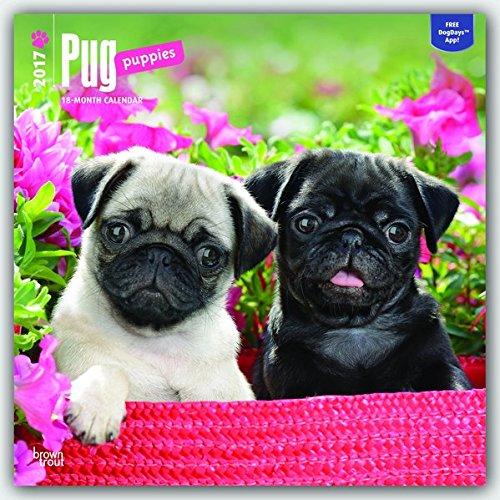 Pug Puppies - Mopswelpen 2017 - 18-Monatskalender mit freier DogDays-App: Original BrownTrout-Kalender [Mehrsprachig] [Kalender]