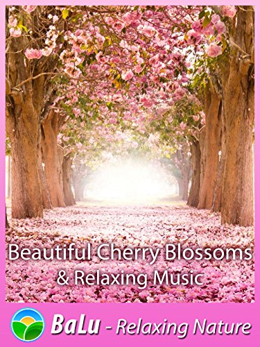 Beautiful Cherry Blossoms & Relaxing Music
