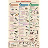 Insect Identification Poster