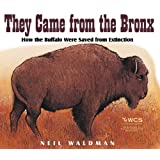 They Came from the Bronx: How the Buffalo Were Saved from Extinction ~ Neil Waldman