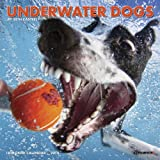 Underwater Dogs 2015 Mini Calendar