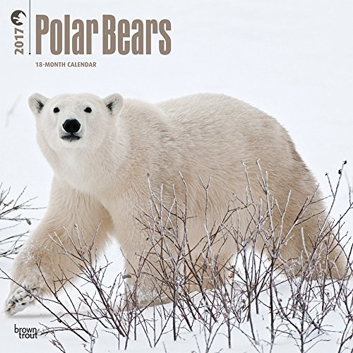 Polar Bears 2017 Wall Calendar 12