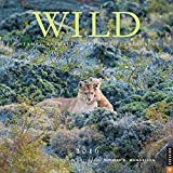 Wild 2016 Wall Calendar: Untamed Animals, Untouched Landscapes...