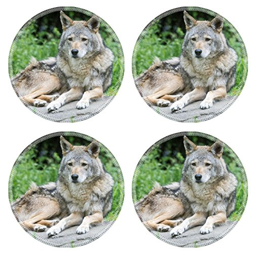 Luxlady Round Coasters Coyote Posed on a Rock Natural Rubber Material Image 19246515231