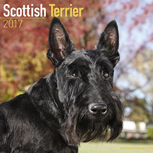 Scottish Terrier Calendar 2017 - Dog Breed Calendars - 2016 - 2017 wall calendars - 16 Month by Avonside