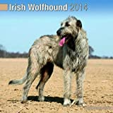 Irish Wolfhound 2014