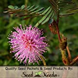 50 Seeds, Sensitive Plant (Mimosa Pudica) Seeds by Seed Needs