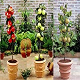 Dwarf Apples and Pears - 1 collection