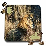 Angelique Cajam Big Cat Safari - Lion king in the grass - 10x10 Inch Puzzle (pzl_26828_2)
