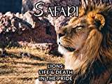 LIONS-LIFE & DEATH IN THE PRIDE