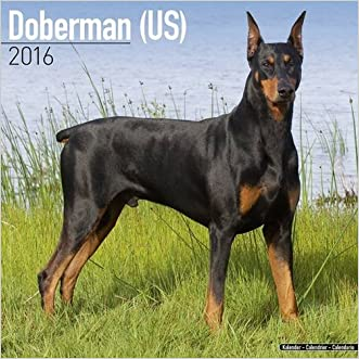 Doberman (US) Calendar - Only Dog Breed Doberman (US) Calendar - 2016 Wall calendars - Dog Calendars - Monthly Wall Calendar by Avonside