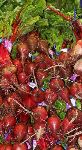 250 CYLINDRA BEET Beta Vulgaris Vegetable Seeds