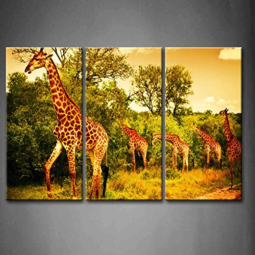 3 Panel Wall Art Yellow Orange A South African Giraffes Big Family Graze In The Wild Fores Eating Leafs Grass Small Road Painting Pictures Print On Canvas Animal The Picture For Home Modern Decoration Piece (Stretched By Wooden Frame,Ready To Hang)