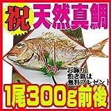 お食い初め 鯛 1尾300g前後 冷蔵 敷き紙とお飾り無料 祝い鯛 山形県産 天然真鯛