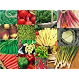 15 packs of vegetable seeds - SWEDE, CARROT, PEPPER etcby Haddons