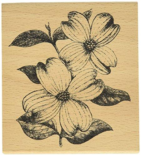 hampton-art-wood-cam-and-chloe-mounted-stamp-4-inch-x-35-inch-dogwood-flowers