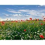 Wandbild foto tapete bunte sommerwiese kt493 feld sommer blüten