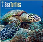 Sea Turtles 2015 - Meeresschildkr�ten...