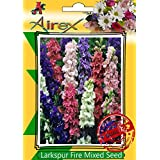 Airex Larkspur Fire Mixed Flower Seeds( Pack Of 30 Seeds Per Packet)