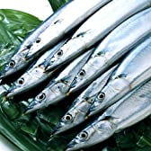 生サンマ 10尾から12尾 (産地直送) とれたて さんま 根室産 秋刀魚