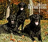 Labrador Retrievers, Black For the Love of  2010 Deluxe Wall (Multilingual Edition)