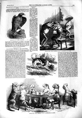 1851 Stuffed Cats Pointer Dog Jewelles Hawk Animals