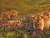 Cute Highland Cows - Premium Quality Heavyweight Mouse Mat #2