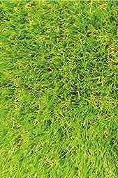 Ottomanson Garden Grass Collection Indoor/Outdoor Artificial Solid Grass Design Area Rug, 3\'11\