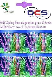 DCS (048) Spring Bonsai aquarium grass 10 Seeds Multi Colored Novel Blooming Plant-10
