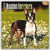 Boston Terriers 2016 Calendar