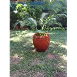 The Garden Store Fibre Glass Pot Large