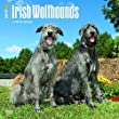 irische wolfshund kaufen