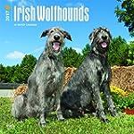 Irish Wolfhounds - Irische Wolfshunde...