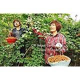 Ryegrass Seed Chicken Duck Fish Goose Graziers 100PCS Original Packaging Seeds For Home Garden Bonsai