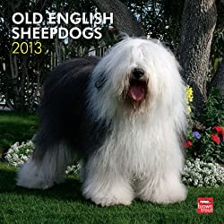 Old English Sheepdogs 2013 Wall Calendar 12&quot; X 12&quot;